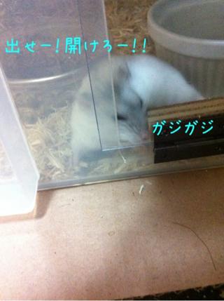 iphone_20110525222824.jpg