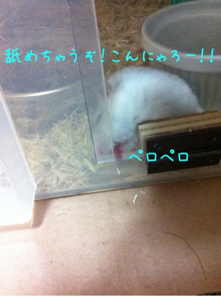 iphone_20110525222918.jpg
