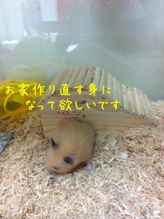 iphone_20110609205637.jpg