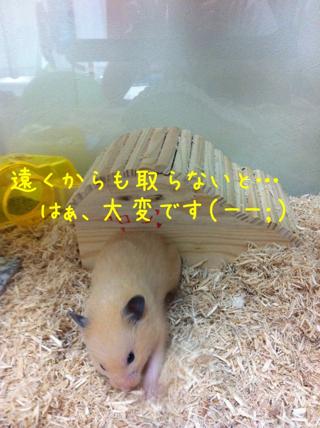 iphone_20110609205717.jpg