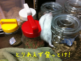 iphone_20110609205804.jpg