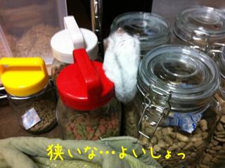 iphone_20110609205852.jpg