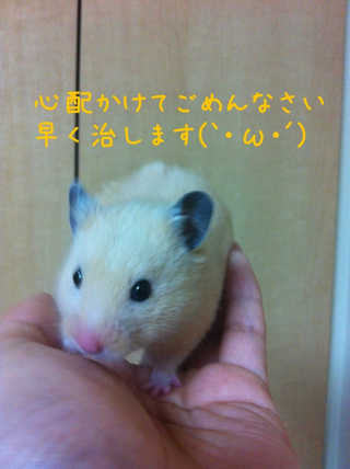 iphone_20110613224030.jpg
