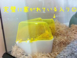 iphone_20110616215107.jpg