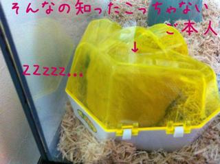 iphone_20110616215144.jpg