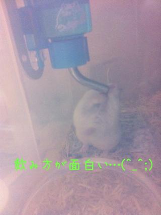 iphone_20110619205200.jpg