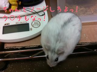 iphone_20110625155438.jpg