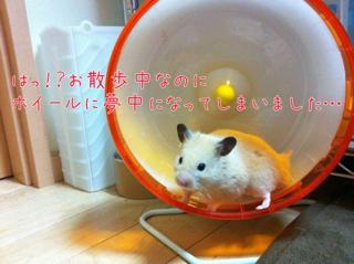 iphone_20110626225040.jpg