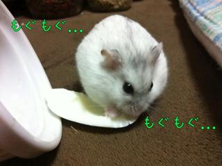 iphone_20110628144240.jpg
