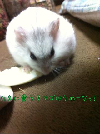 iphone_20110628144247.jpg