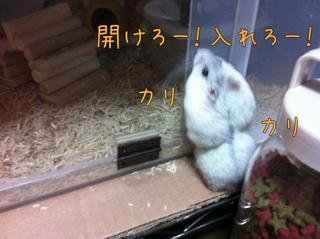 iphone_20110711221943.jpg