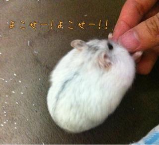 iphone_20110716221354.jpg