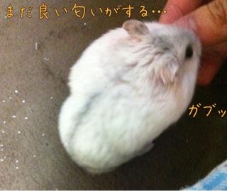 iphone_20110716221413.jpg