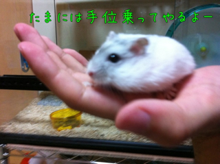 iphone_20110720221329.jpg