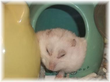 ジャスミンの昼寝