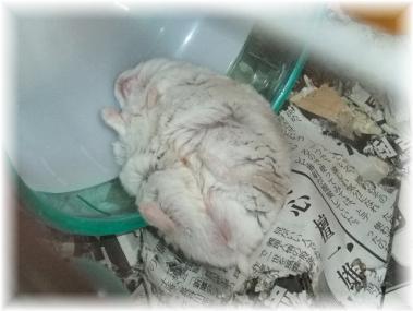 トミーの昼寝