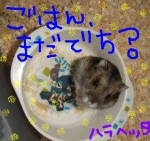 ぱっこ☆③号
