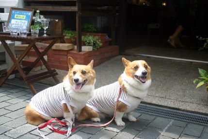 モデル犬♪