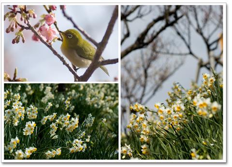 070204立春 県立吉野公園