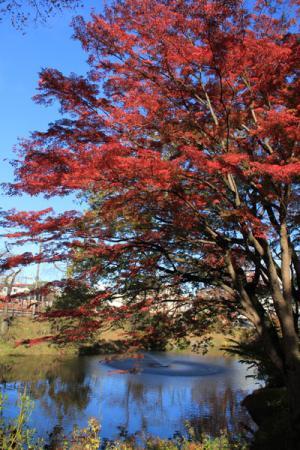 棚倉城跡の秋