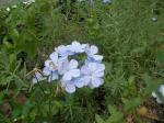街中の花1