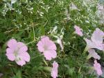 街中の花2