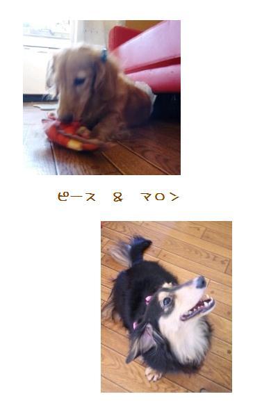 pmphoto.jpg