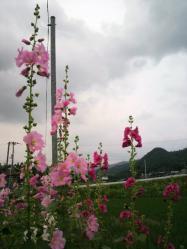 20110619あおい~~♪2