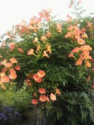 20110709花