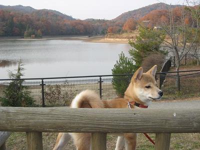 福島大池をバックに