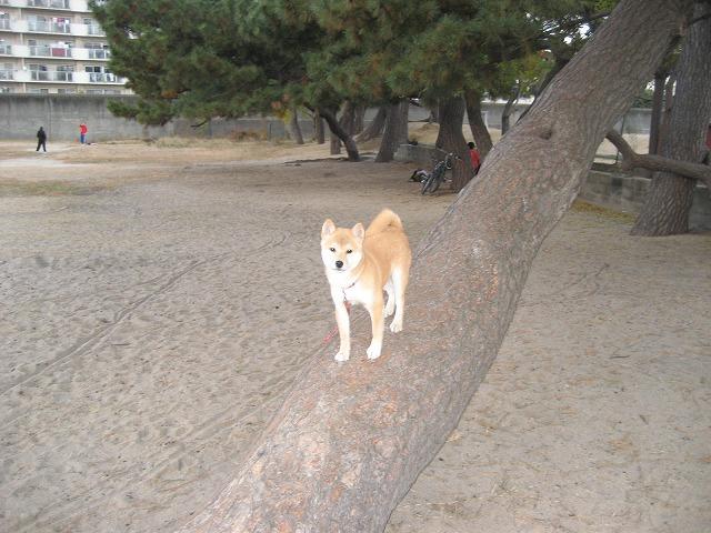 木登り大好き!