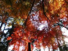 奥高尾の紅葉