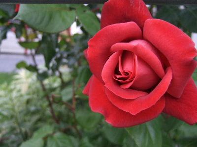 2011_0630b.jpg