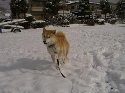 雪の上を走る~