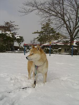雪似合う?