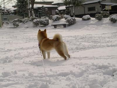 雪似合ってるね
