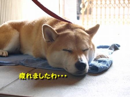 疲れた・・・