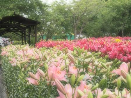 ファンタジーゆり園