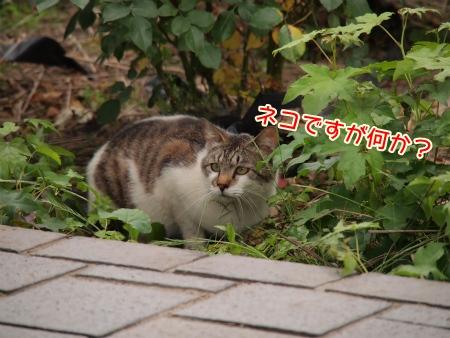 ネコです!