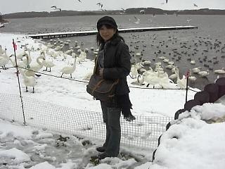 11月1日クッチャロ湖2