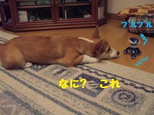 Rin071016-1.jpg
