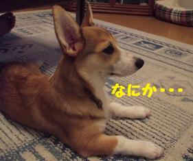 Rin071016-9.jpg