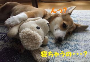 Rin071018-8.jpg