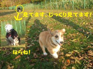 Rin071023-30.jpg