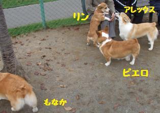 Rin071027-2.jpg