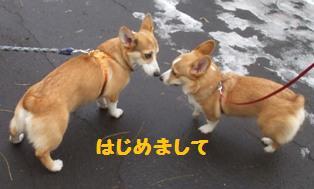 Rin071201-41.jpg
