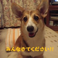 Rin071208-1.jpg