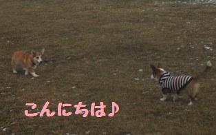 Rin071209-2-4.jpg