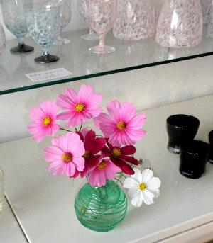 とても身近で可愛い花