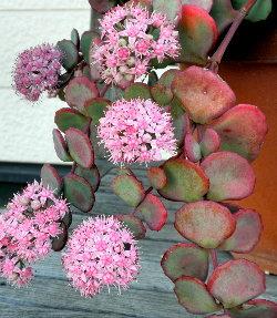 小さな花がいっぱい